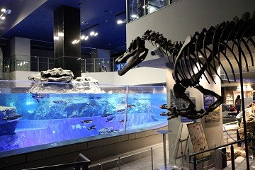 きょうりゅうすいぞくかんツアー すみだ水族館